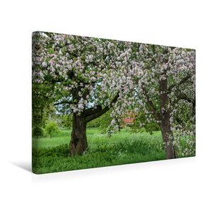 Premium Textil-Leinwand 45 cm x 30 cm quer Lebensraum von Steink