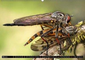 Faszination Makrofotografie: Raubfliegen (Wandkalender 2018 DIN