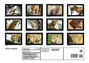 African Leopards (Poster Book DIN A3 Landscape)