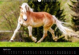 Pferde Träume