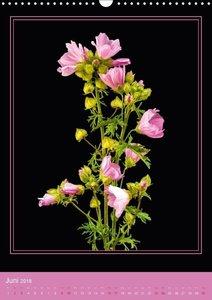 Wiesenblumen - Wilde Schönheiten