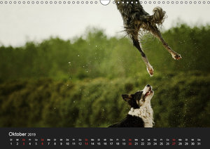 Der Bordercollie-Kalender (Wandkalender 2019 DIN A3 quer)