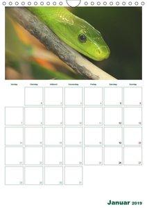 Afrika´s wilde Tierwelt / Planer (Wandkalender 2019 DIN A4 hoch)