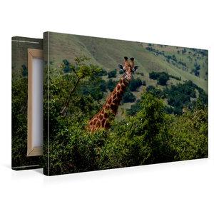 Premium Textil-Leinwand 45 cm x 30 cm quer Neugierige Giraffe