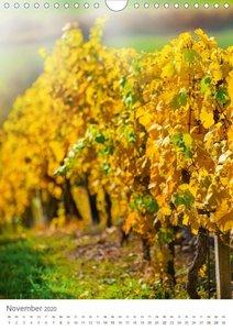 Weinjahr