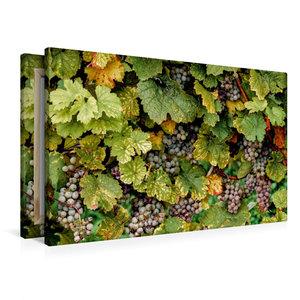 Premium Textil-Leinwand 90 cm x 60 cm quer Rheingau Riesling Tra