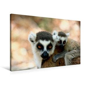 Premium Textil-Leinwand 90 cm x 60 cm quer Katta Lemur mit Baby