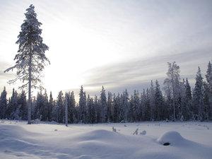 CALVENDO Puzzle Nadelwald im verschneiten Schweden 1000 Teile Le