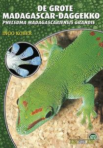 Grote Madagascar-Daggecko (niederl.)