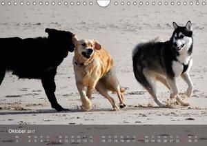 Hunde am Meer - Spielen, toben und rennen