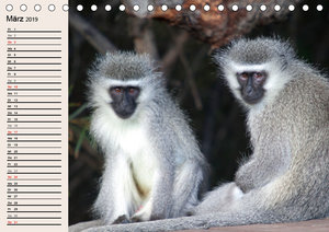 Affen in Afrika (Tischkalender 2019 DIN A5 quer)