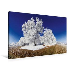 Premium Textil-Leinwand 90 cm x 60 cm quer Baum im Raureif bei P