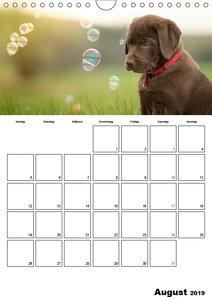 Labrador Welpe - Seelenhund (Wandkalender 2019 DIN A4 hoch)