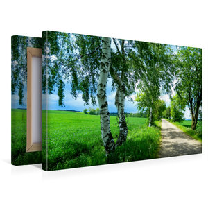 Premium Textil-Leinwand 45 cm x 30 cm quer Saftiges Grün