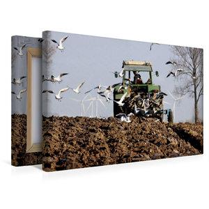 Premium Textil-Leinwand 45 cm x 30 cm quer Pflügen mit Möwen als