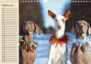 Beste Freunde. Bezaubernde Tierfreundschaften (Wandkalender 2020