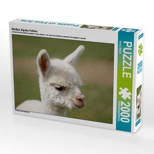 Weißes Alpaka Fohlen 2000 Teile Puzzle quer