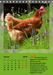 achja?! TIERISCH KURIOS (Tischkalender 2019 DIN A5 hoch)