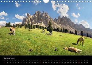 Wunderschöne Haflingerwelt (Wandkalender 2018 DIN A4 quer)