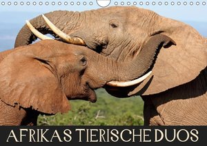 AFRIKAS TIERISCHE DUOS (Wandkalender 2019 DIN A4 quer)