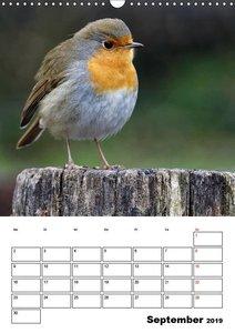 Vögel im heimischen Garten (Wandkalender 2019 DIN A3 hoch)