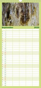 Holzstrukturen - Familienplaner hoch (Wandkalender 2020 , 21 cm