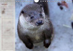 Otters / UK-Version / Birthday Calendar (Wall Calendar perpetual