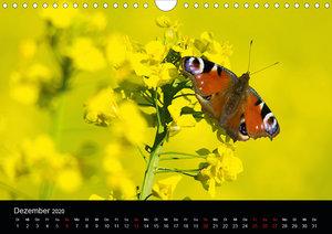 Schmetterlinge Baden-Württemberg