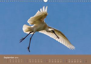 Vogelflug-Faszination (Wandkalender 2018 DIN A3 quer)