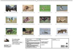 Emotionale Momente: Tierischer Sex. / CH-Version (Wandkalender 2