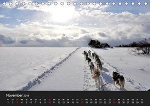 Sibirische Huskys aus Deutschland (Tischkalender 2019 DIN A5 que