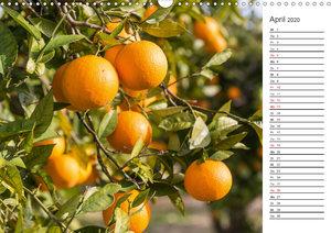 Emotionale Momente: Orangen und Zitronen. (Wandkalender 2020 DIN