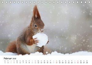 Unsere Eichhörnchen in Bayern