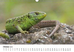 Wilde Tiere - Ganz nah (Wandkalender 2019 DIN A3 quer)