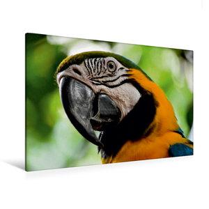 Premium Textil-Leinwand 120 cm x 80 cm quer Papagei