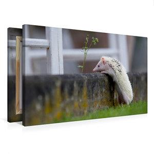 Premium Textil-Leinwand 75 cm x 50 cm quer Afrikanischer Weißbau