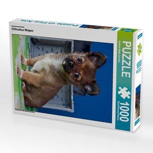 Ein Motiv aus dem Kalender Chihuahua Welpen 1000 Teile Puzzle ho
