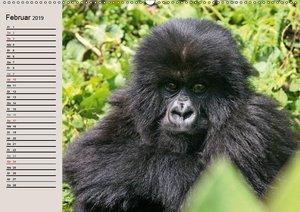 Berggorillas - die sanften Riesen (Wandkalender 2019 DIN A2 quer