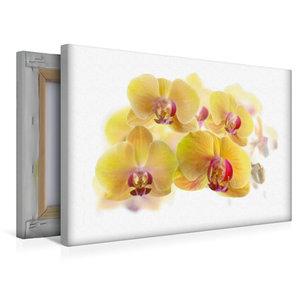 Premium Textil-Leinwand 45 cm x 30 cm quer Phalaenopsis Orchidee