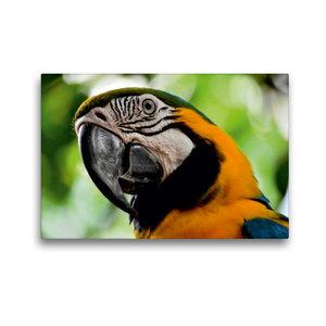 Premium Textil-Leinwand 45 cm x 30 cm quer Papagei