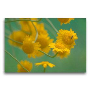 Premium Textil-Leinwand 75 cm x 50 cm quer Gelbe Magerite