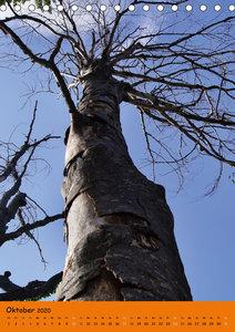 Baum-Ästhetik