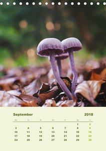 Wundersame Welt der Pilze