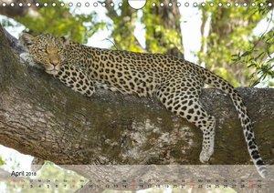 Leoparden. Elegante Jäger