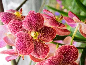 CALVENDO Puzzle Farbzauber Orchideen 1000 Teile Lege-Größe 64 x