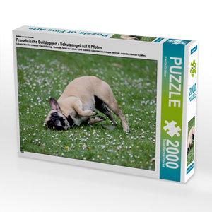 Ein Motiv aus dem Kalender Französische Bulldoggen - Schutzengel