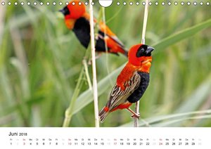 Vögel in Afrika - Magie der Farben