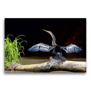 Premium Textil-Leinwand 75 cm x 50 cm quer Schlangenhalsvogel