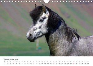 Die Pferde Islands
