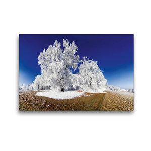 Premium Textil-Leinwand 45 cm x 30 cm quer Baum im Raureif bei P